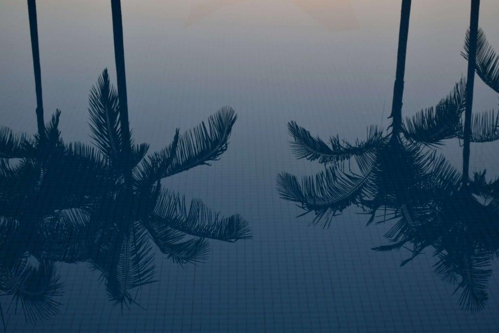 Espelho d'agua - Palmeiras arvore