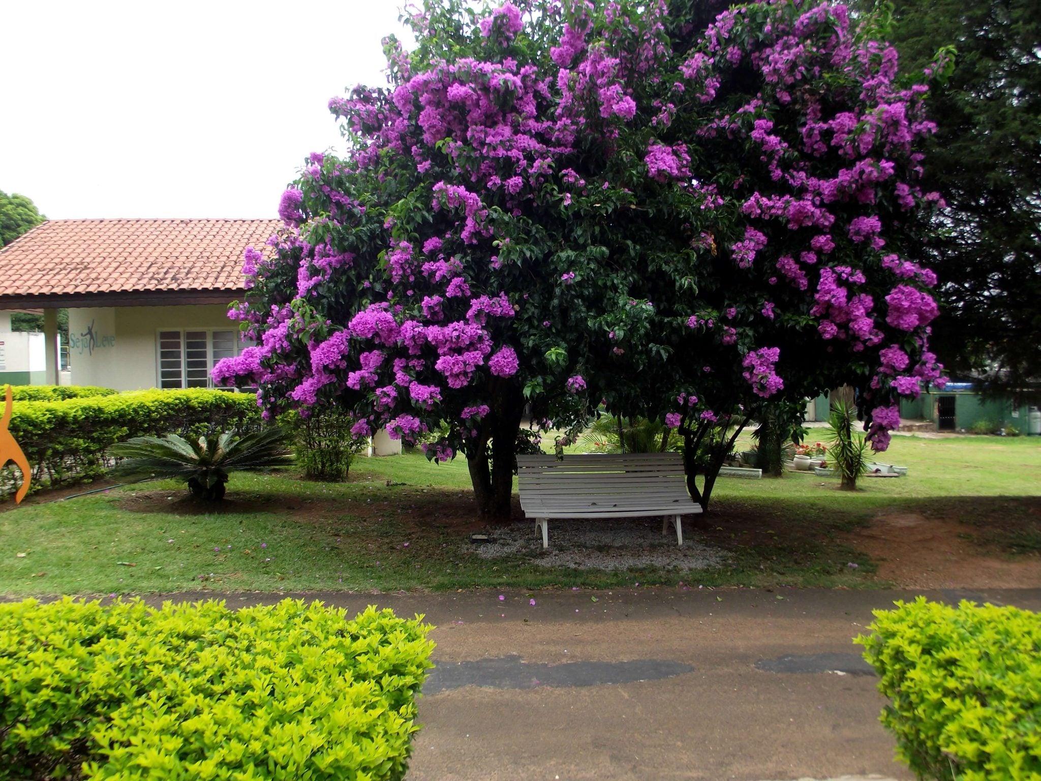Caminhada - Descanso - Aconchego - SPA Sorocaba