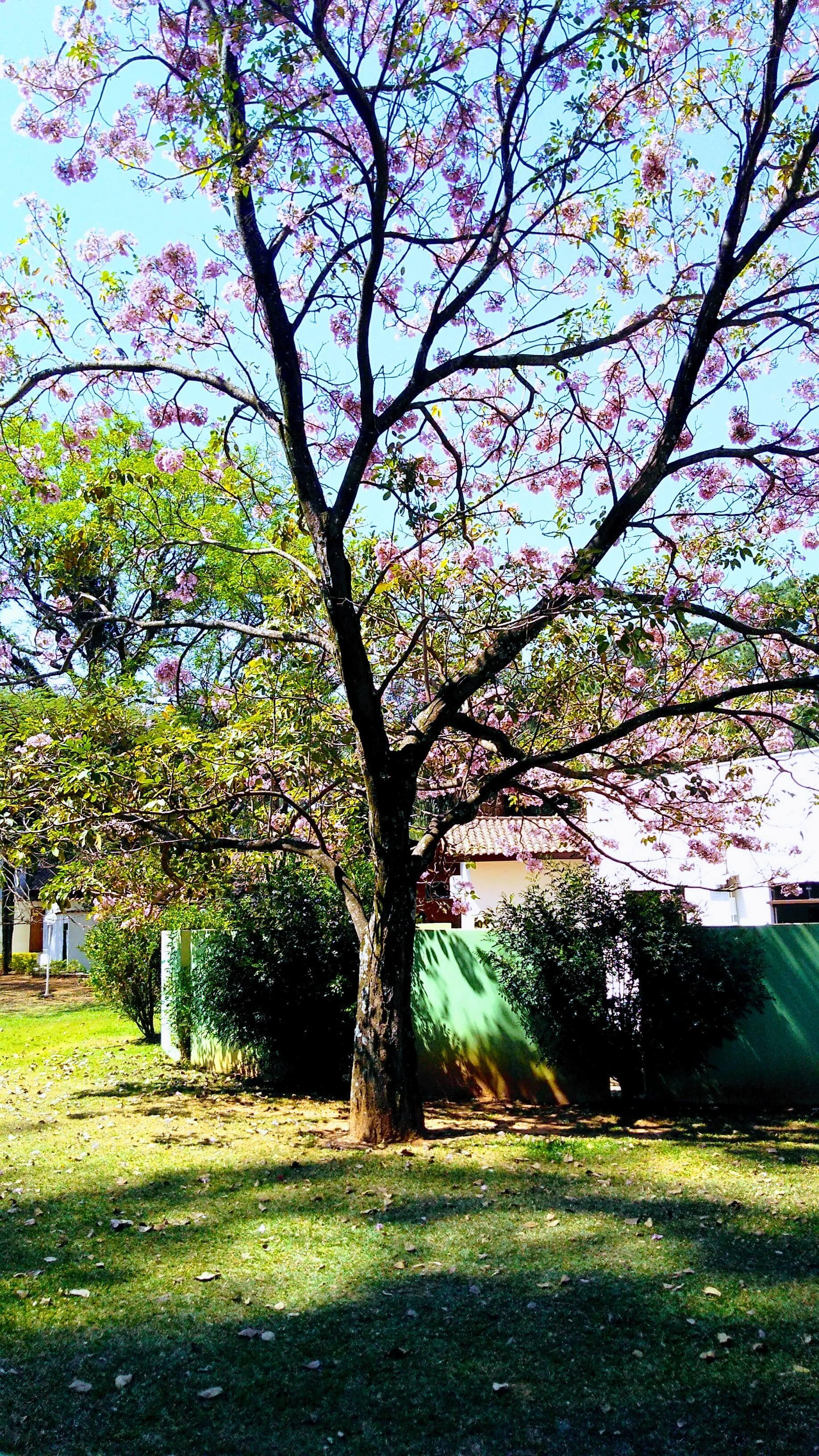 Primavera no SPA Sorocaba